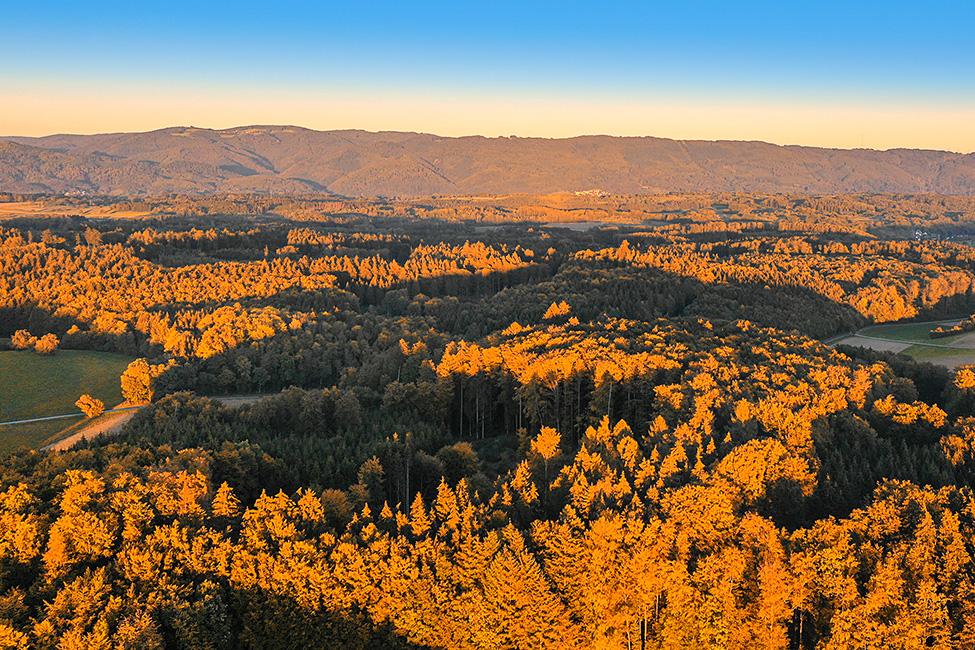 """zur """"goldenen Stunde"""" über den Wälder"""
