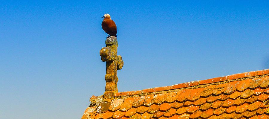 Die Taube auf dem Kirchdach