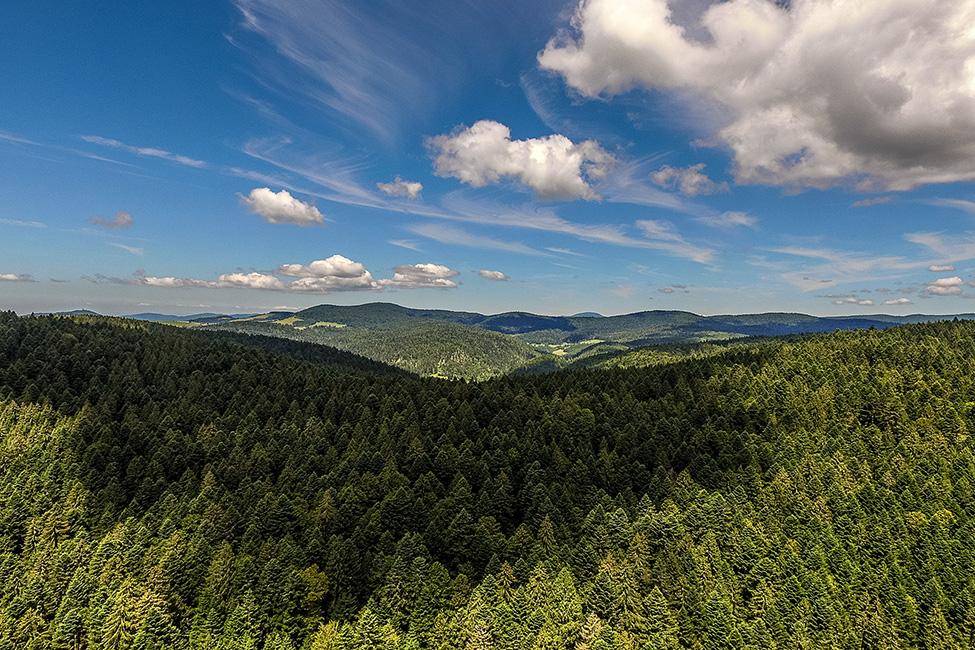 Auf den Höhen des Schwarzwaldes  (Drohnenaufnahme)